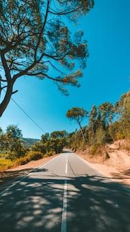 Pionowe ujęcie drogi otoczonej zielenią pod pięknym błękitnym niebem