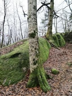 Pionowe ujęcie drzew w środku lasu w larvik w norwegii
