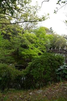 Pionowe ujęcie drzew ze starym mostem pod zachmurzonym niebem