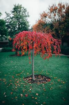 Pionowe ujęcie drzewa z czerwonymi liśćmi w parku w ciągu dnia