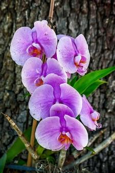 Pionowe ujęcie fioletowej orchidei ćmy za drzewem