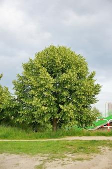 Pionowe ujęcie jednego zielonego drzewa świeżego w ciągu dnia