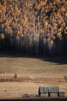 Pionowe ujęcie jesiennego lasu w xijiang, chiny