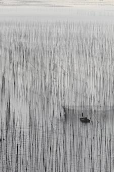 Pionowe ujęcie jeziora z wysokimi roślinami