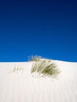 Pionowe ujęcie juki z drzewa mydlanego próbującego dostać się nad wydmę w parku narodowym white sands