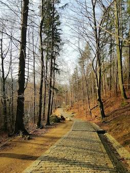 Pionowe ujęcie kamiennego chodnika pośród wzgórz porośniętych drzewami w jeleniej górze.