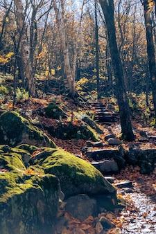Pionowe ujęcie kamiennych schodów na leśnym szlaku jesienią
