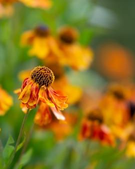 Pionowe ujęcie kichańca zwyczajnego w ogrodzie