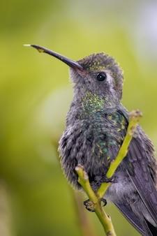 Pionowe ujęcie kolibra siedzącego na gałęzi drzewa