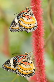 Pionowe ujęcie kolorowych motyli na roślinie