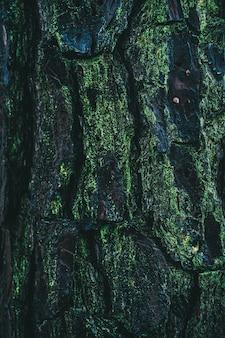 Pionowe ujęcie kory sosnowej pokrytej mchem