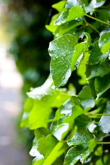 Pionowe ujęcie kropelek wody na zielonych liściach