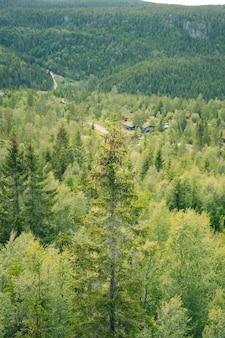 Pionowe ujęcie lasu i wzgórz