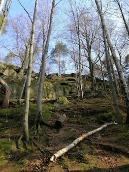 Pionowe ujęcie lasu, korzeni drzew i ściętego drewna w jeleniej górze.