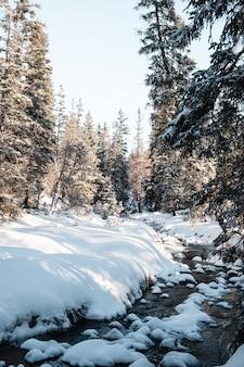 Pionowe ujęcie lasu z wysokimi drzewami w zimie