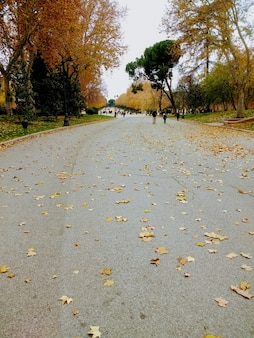 Pionowe ujęcie ludzi idących obok drzew w parku jesienią