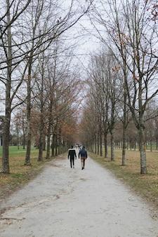 Pionowe ujęcie ludzi idących ścieżką wśród pięknych wysokich drzew