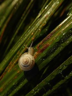 Pionowe ujęcie małego ślimaka na zroszonej zielonej trawie