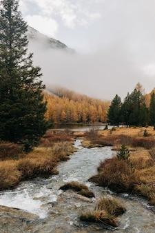 Pionowe ujęcie małego strumienia wody przepływającej przez jesienny las w mglisty dzień