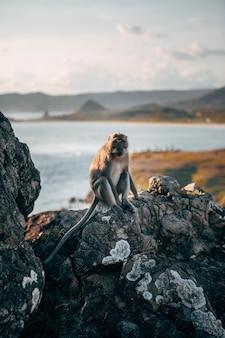 Pionowe ujęcie małpy siedzącej na skale z pięknym rozmytym morzem