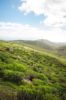 Pionowe ujęcie pięknego pagórkowatego terenu pokrytego zieloną roślinnością