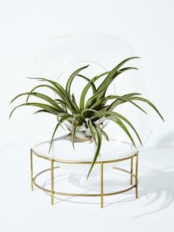 Pionowe ujęcie pięknej rośliny doniczkowej w doniczce na białym tle