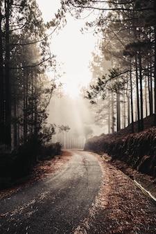 Pionowe ujęcie pięknej starej drogi otoczonej skałami i wysokimi drzewami - idealne na tapetę
