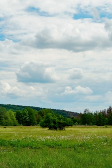 Pionowe ujęcie pięknej zielonej dolinie pod pochmurnym niebem