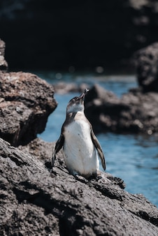 Pionowe ujęcie pingwina na kamieniu