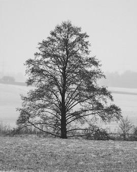 Pionowe ujęcie pojedynczego drzewa w skali szarości