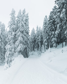 Pionowe ujęcie pokrytych śniegiem sosen na wzgórzu całkowicie pokrytym śniegiem