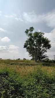 Pionowe ujęcie pola pokrytego zielenią w świetle słonecznym i zachmurzonym niebie w ciągu dnia