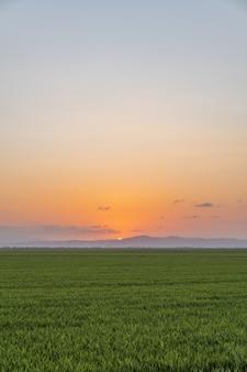 Pionowe ujęcie pola ryżowego uchwyconego o zachodzie słońca w albufera, walencja, hiszpania