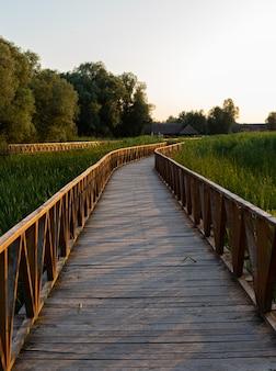 Pionowe ujęcie promenady przez wysokie trawy i drzewa podczas wschodu słońca