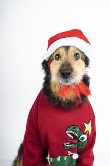 Pionowe ujęcie psa w ubraniach o tematyce bożonarodzeniowej