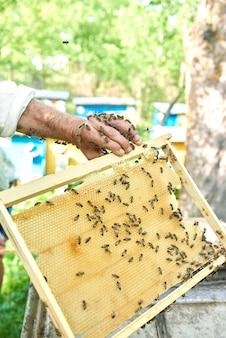 Pionowe ujęcie pszczelarza trzymającego plaster miodu z pszczołami.
