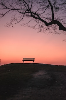 Pionowe ujęcie pustej ławki pod bezlistnym drzewem podczas zachodu słońca