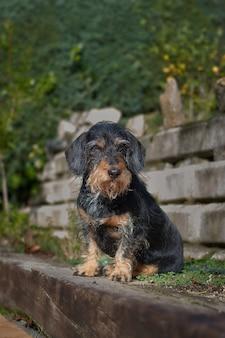 Pionowe ujęcie puszystego brudnego uroczego psa w naturze, przed wzgórzem i schodami