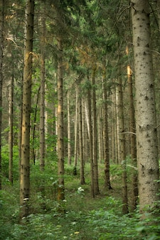 Pionowe ujęcie rosnących drzew w polu pod wpływem promieni słonecznych