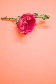 Pionowe ujęcie różowego kwiatu goździka na małej łodydze, umieszczonego na kremowej powierzchni
