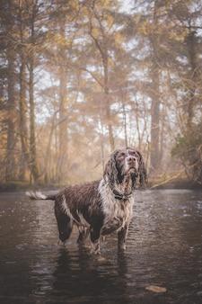 Pionowe ujęcie samotnego mokrego psa patrzącego w górę po ulewnym deszczu