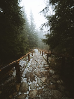 Pionowe ujęcie ścieżki w środku pięknego lasu na maderze w portugalii