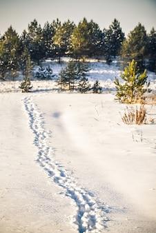 Pionowe ujęcie śladów stóp na śniegu w lesie
