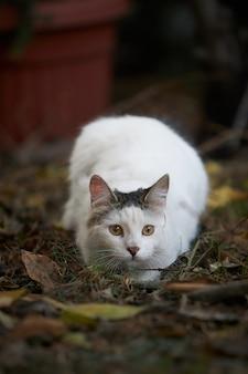 Pionowe ujęcie słodkiego białego kota leżącego na ziemi w świetle dziennym