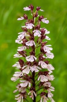 Pionowe ujęcie spalonego kwiatu orchidei