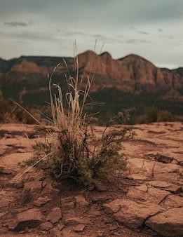 Pionowe ujęcie suchego krzewu rosnącego na suchej ziemi