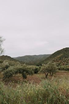 Pionowe ujęcie szeregu drzew w trawiastym polu z wysokimi górami skalistymi w tle
