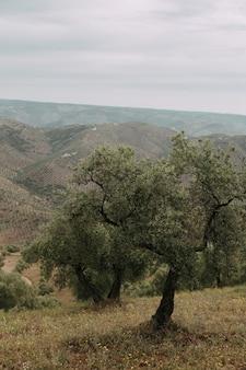 Pionowe ujęcie szeregu drzew w trawiastym polu z wysokimi górami skalistymi