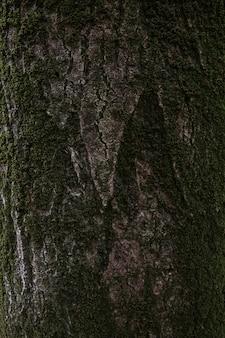 Pionowe ujęcie tekstury brązowej kory drzewa z zielonym mchem na nim