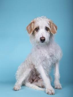 Pionowe ujęcie uroczego psa rasy mieszanej siedzącej na niebieskiej powierzchni